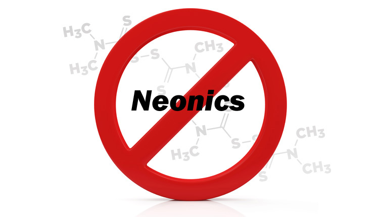 No Neonicotinoids